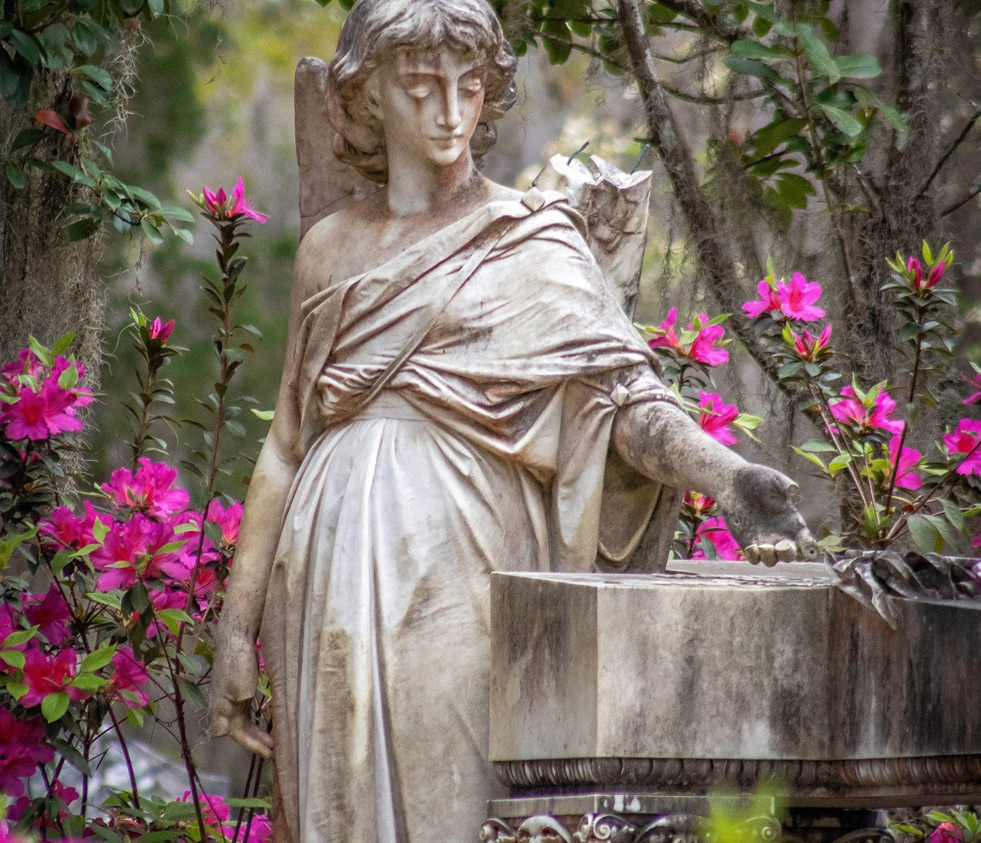 A statue surrounded by blooming pink azaleas in Bonaventure Cemetery