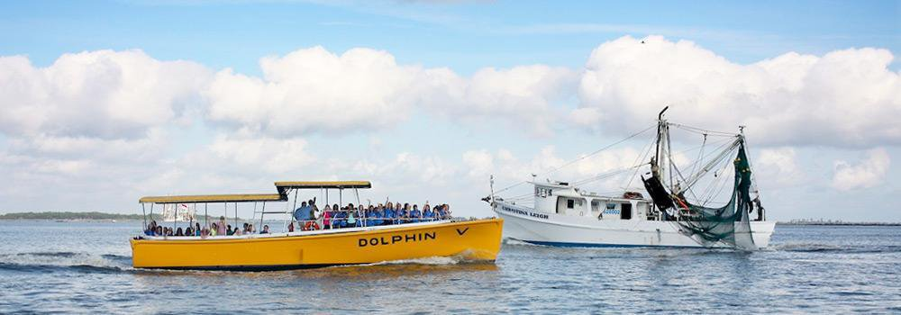 Captain Mike's Dolphin Tours